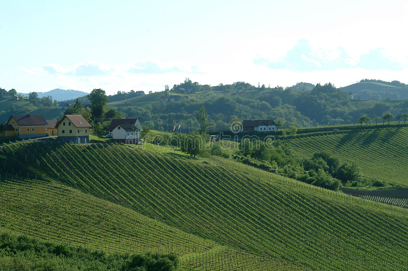 Vineyard. A panorama of a green vineyard idyll in the south of styria royalty free stock photography
