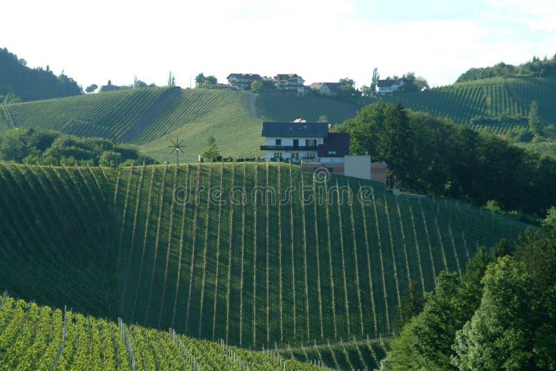 Vineyard. Green vineyard idyll in the south of styria royalty free stock photos