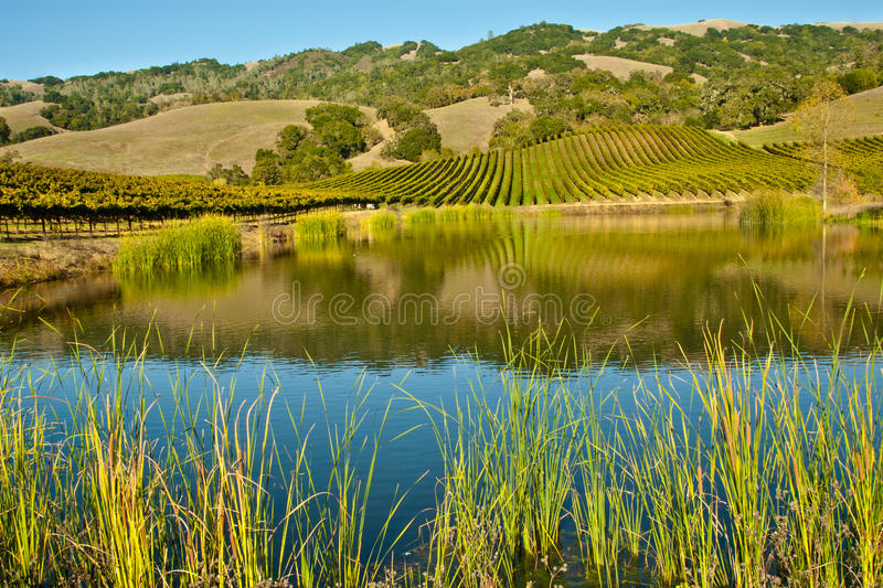 Download Vineyard stock photo. Image of hills, plantation, lake - 21892160