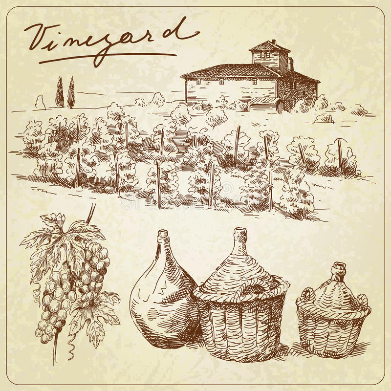 Vineyard. Winery - hand drawn collection stock illustration