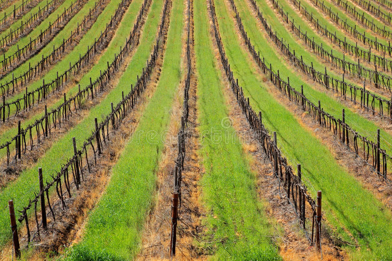 Download Vineyard stock photo. Image of agricultural, countryside - 26110684