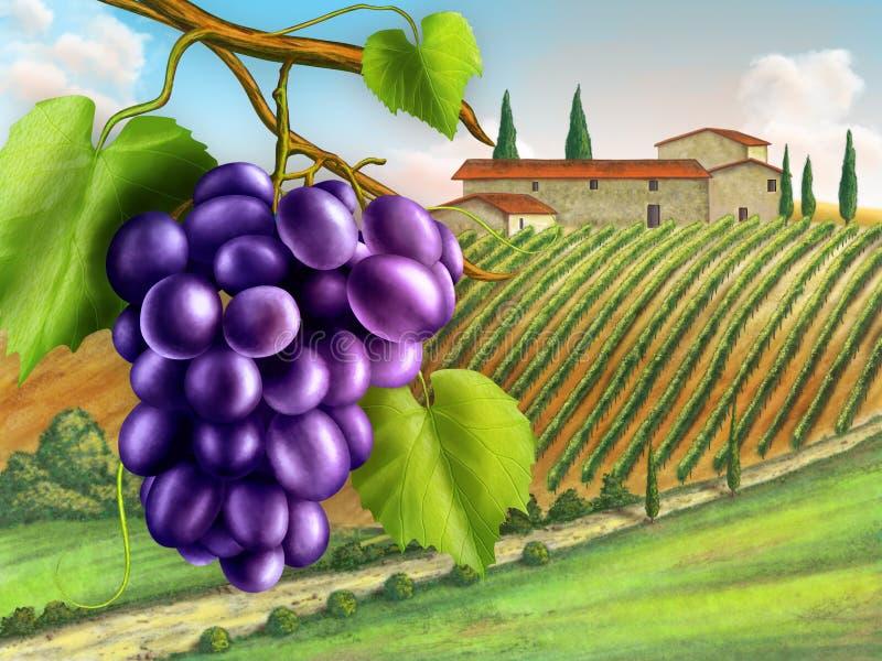 Vineyard royalty free illustration