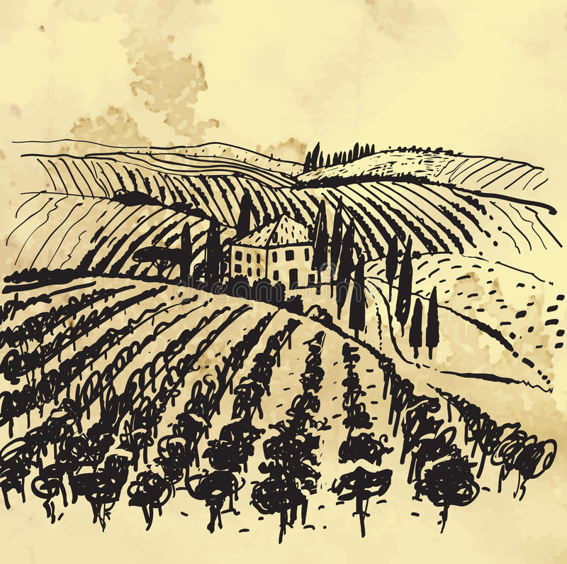 Download Vineyard stock vector. Image of paper, drawing, landscape - 28462345