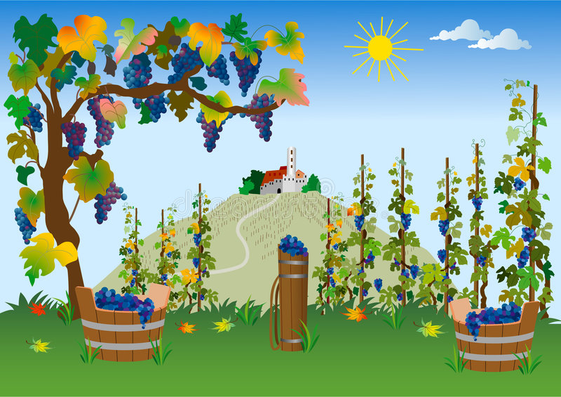 Vineyard. Summer idyllic scene with old castle vector illustration