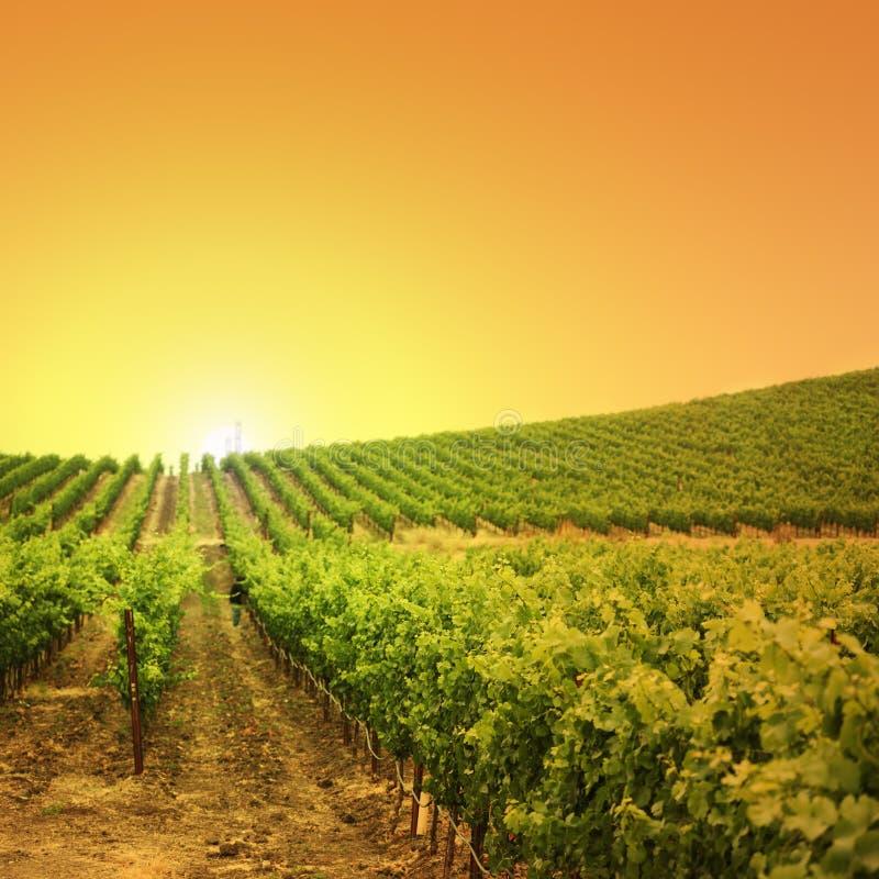 Free Vineyard Stock Images - 9678684