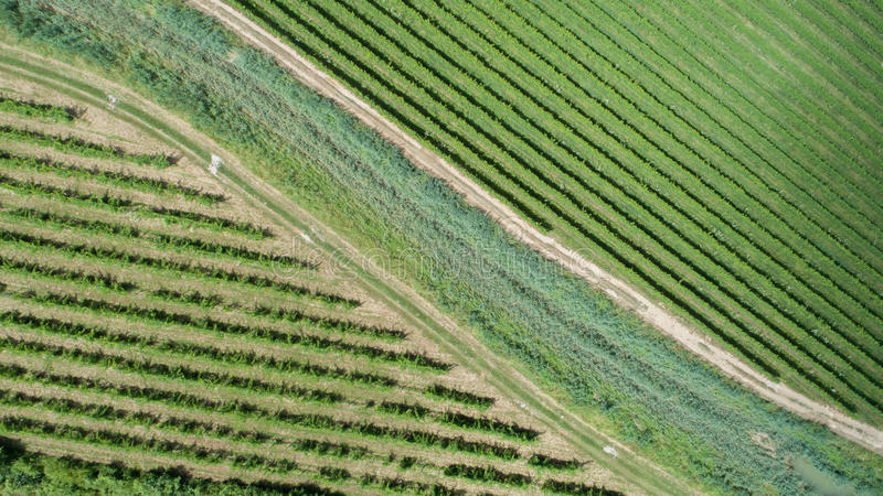 Vineyard from above. Aerial view of vineyards in Goriska Brda, Slovenia stock photos