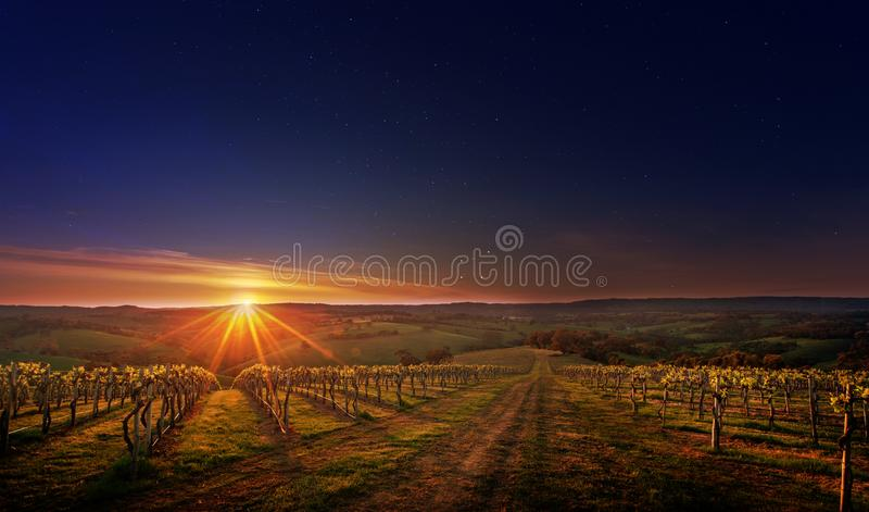 Vineyard in the Adelaide Hills wine region, South Australia. Captured just as day breaks across the grapevines of a vineyard located in the Adelaide Hills. South stock photos