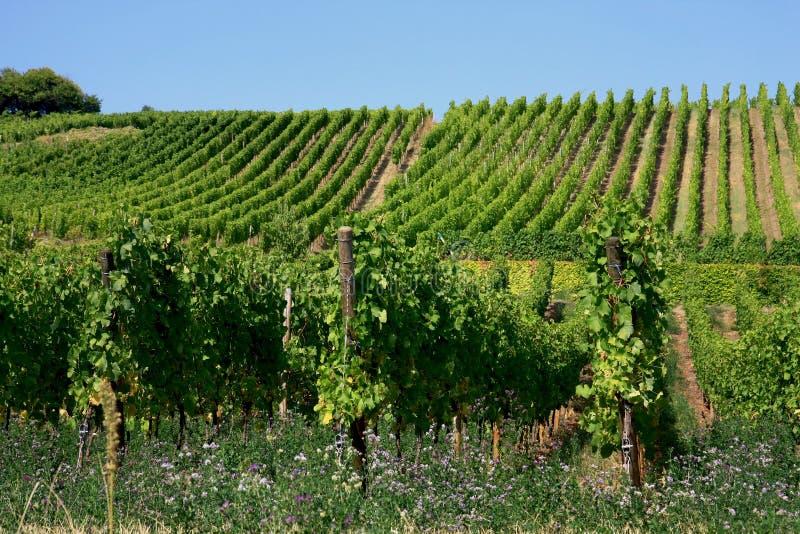 Vineyard In Alsace, France Stock Photo