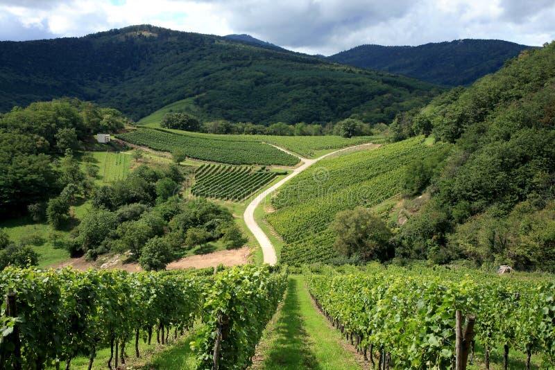 Vineyard - Alsace, France Royalty Free Stock Photos