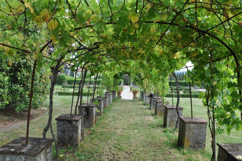 Villa Vineyard arch  Lucca Tuscany stock photo