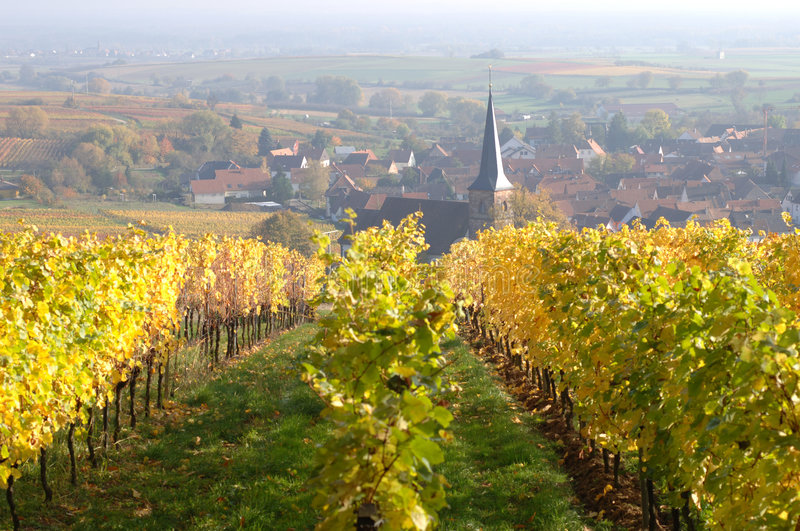 Vineyard in autumn. Palatinate Forest, Germany royalty free stock photos