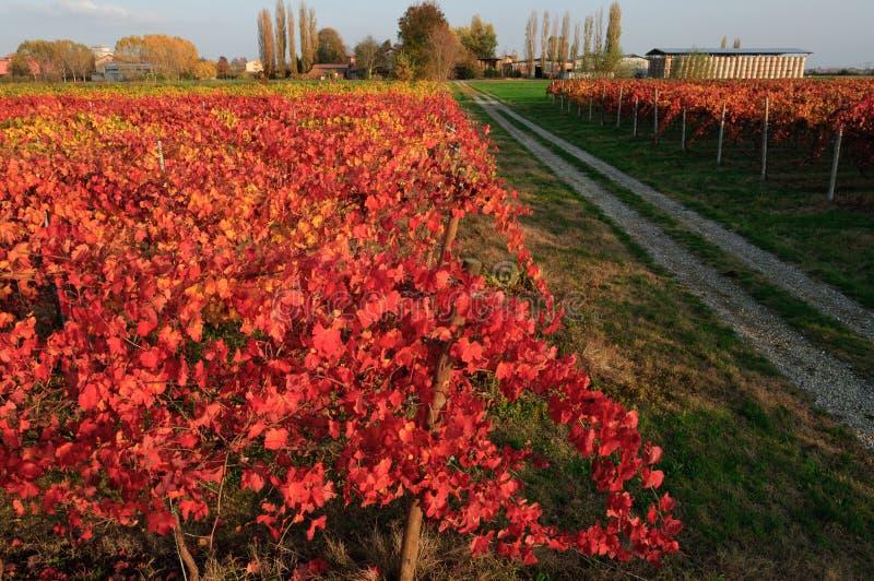 Download Vineyard in autumn stock photo. Image of leaf, farm, vineyard - 27147614