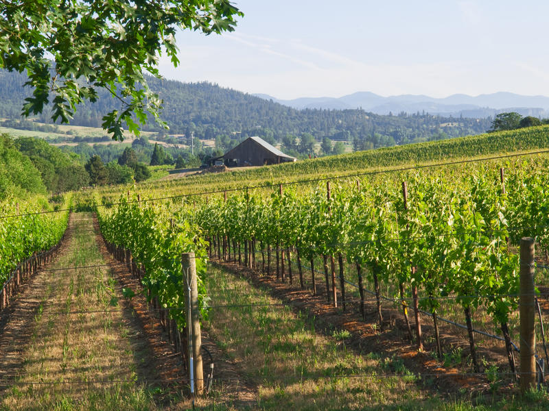 Vineyard With Barn And Mountains Stock Photography