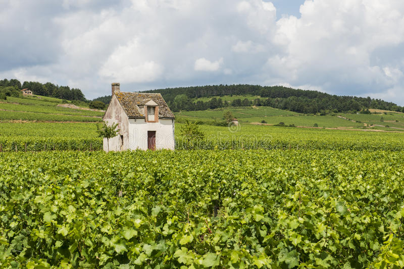Vineyard in Beaune. Vineyard at Beaune with small vinyard house, France stock images