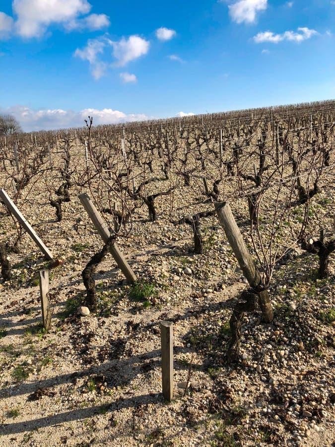 Vineyard in Bordeaux in the Winter. Hillside vineyards in the winter, very rocky soil, great terroir royalty free stock image