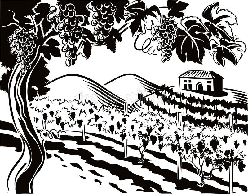 Vineyard with bunches of ripe grapes. In the background a hilly landscape with a farm surrounded by vineyards stock illustration