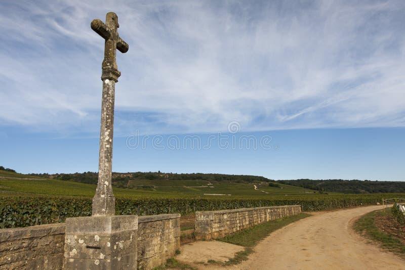 Vineyard in burgundy, france. Vineyard in vosne romanee, burgundy, france during autumn or harvest season royalty free stock photo