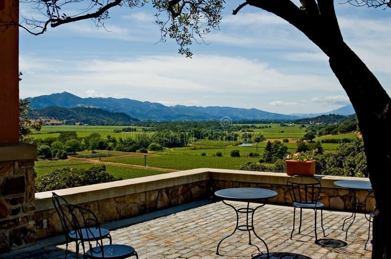 Vineyard in California royalty free stock images