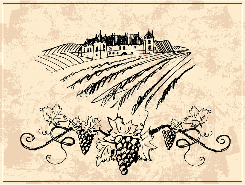 Vineyard and castle. Rural landscape with vineyard and grapevine