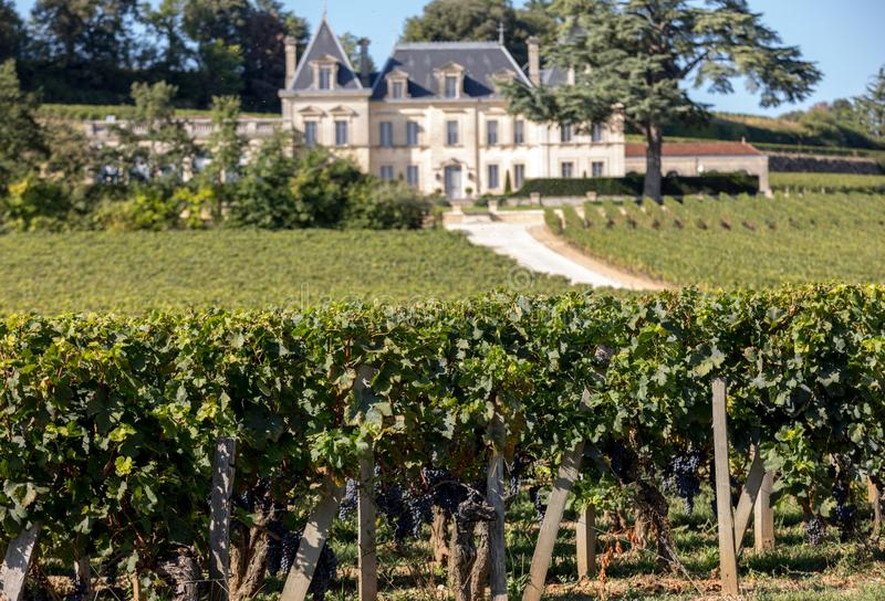 Vineyard of Chateau Fonplegade - name literally fountain of plenty was derived from the historic 13th century stone fountain tha stock images