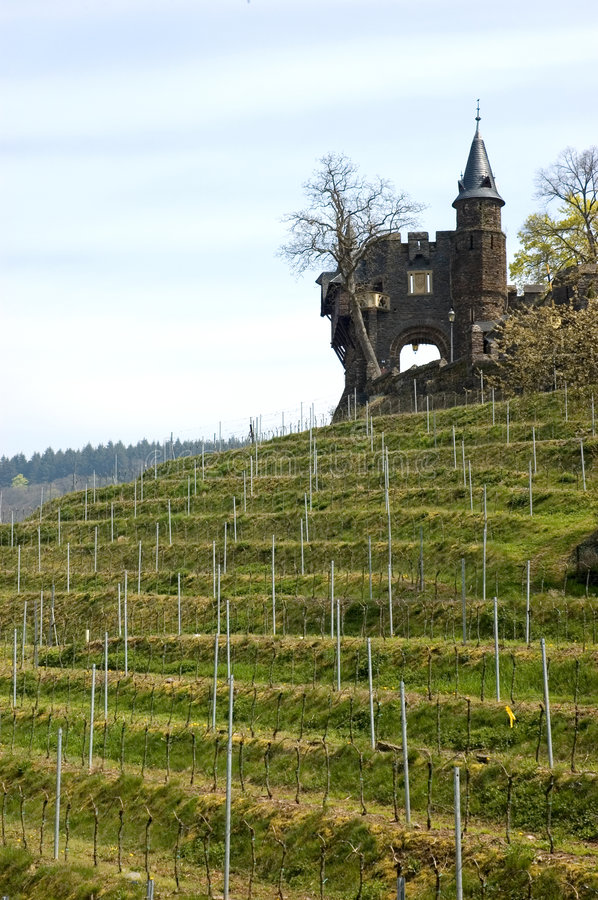 Vineyard Cochem. Cochem is a town in Rhineland-Palatinate, western Germany, capital of the district Cochem-Zell. It is situated in the valley of the Mosel, at royalty free stock images