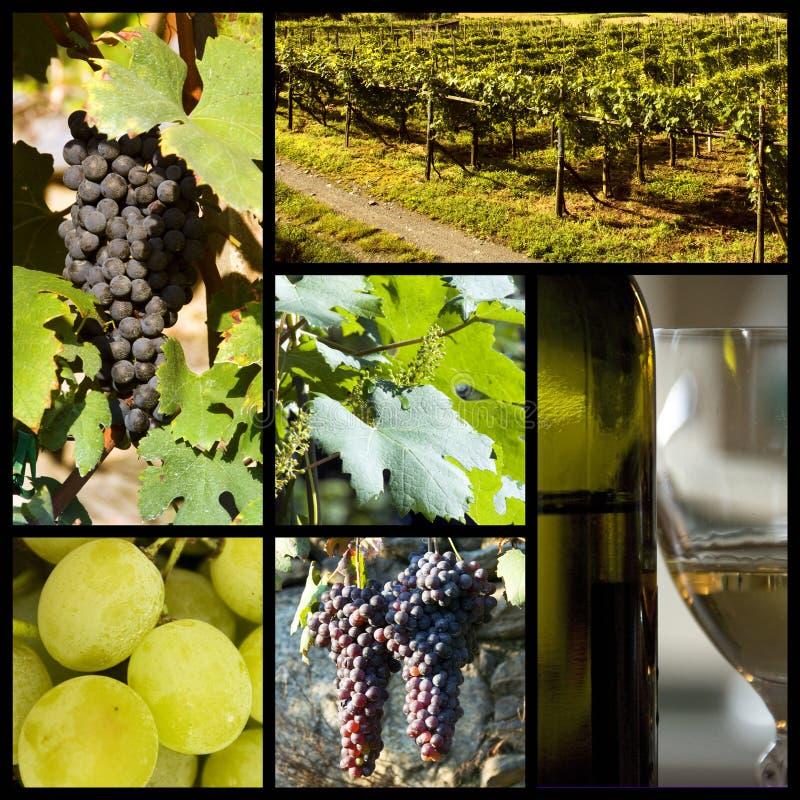 Vineyard collage royalty free stock photos
