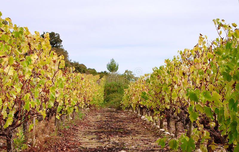 Vineyard countryside royalty free stock images