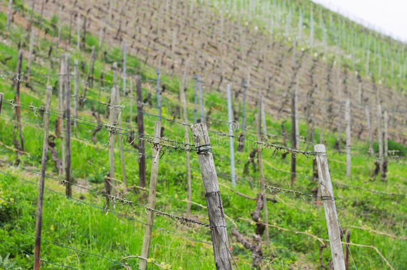 A vineyard in the countryside Bacharch. Germany, Europe royalty free stock photo