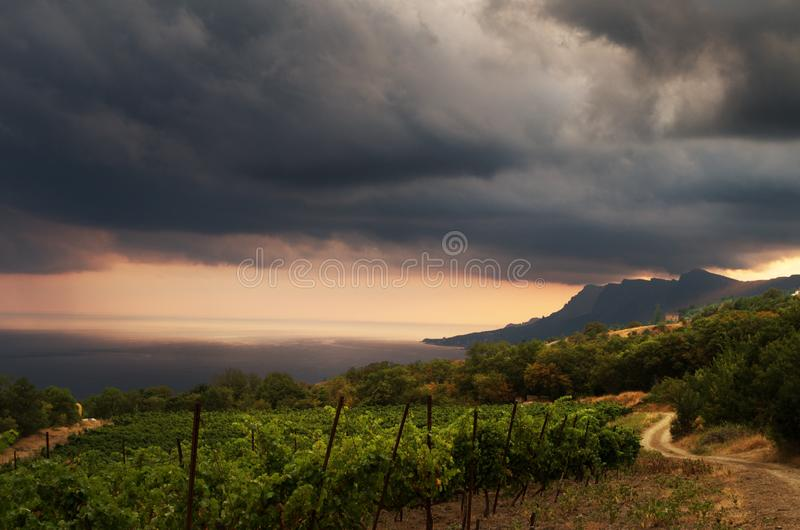 Vineyard and dark stormy clouds. Sea mountain panoramic view. Vine grape harvest growing plants on trellis canopy system royalty free stock photography