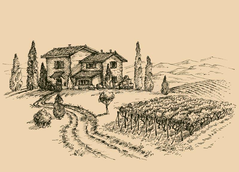 Vineyard drawing. Traditional farm sketch royalty free illustration