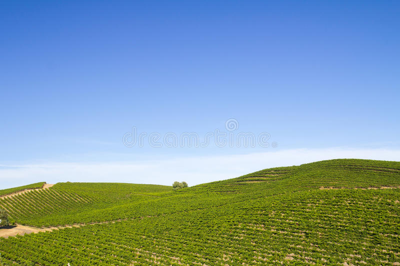 Download Vineyard Field Royalty Free Stock Images - Image: 26082569