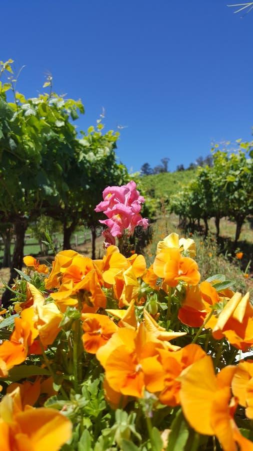 Vineyard Flowers stock photography