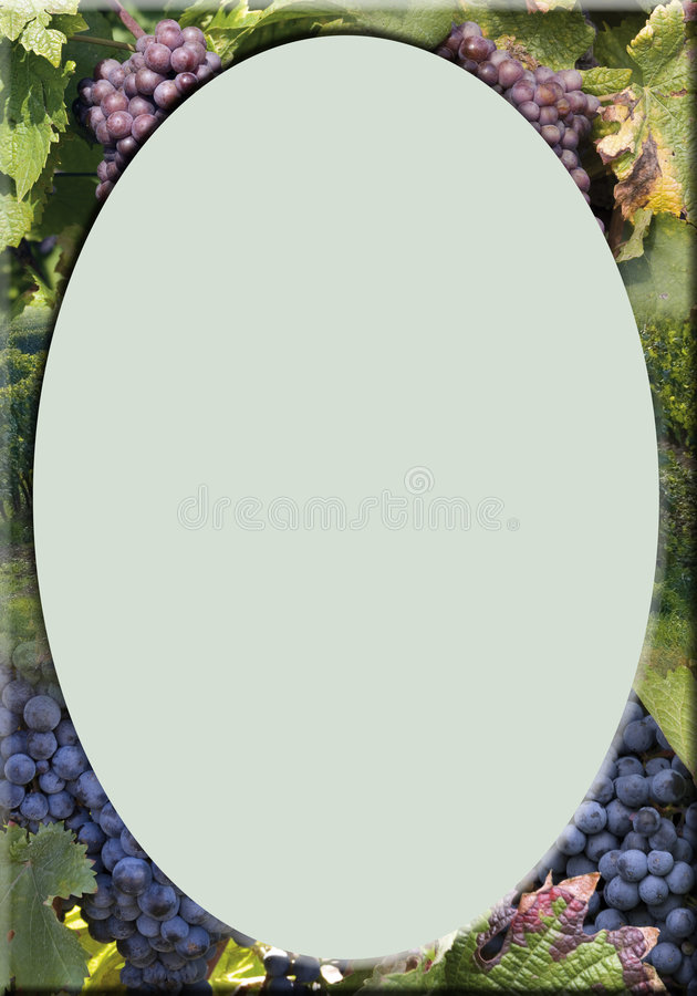 Download Vineyard-frame Royalty Free Stock Photo - Image: 1333855