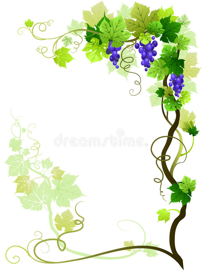 Vineyard frame. With space for text vector illustration