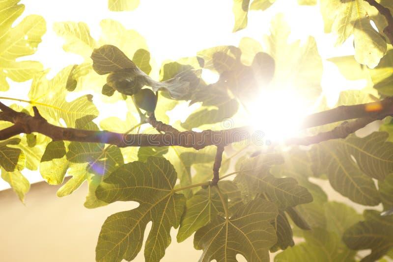 Download Vineyard in france stock image. Image of branch, natural - 21560393