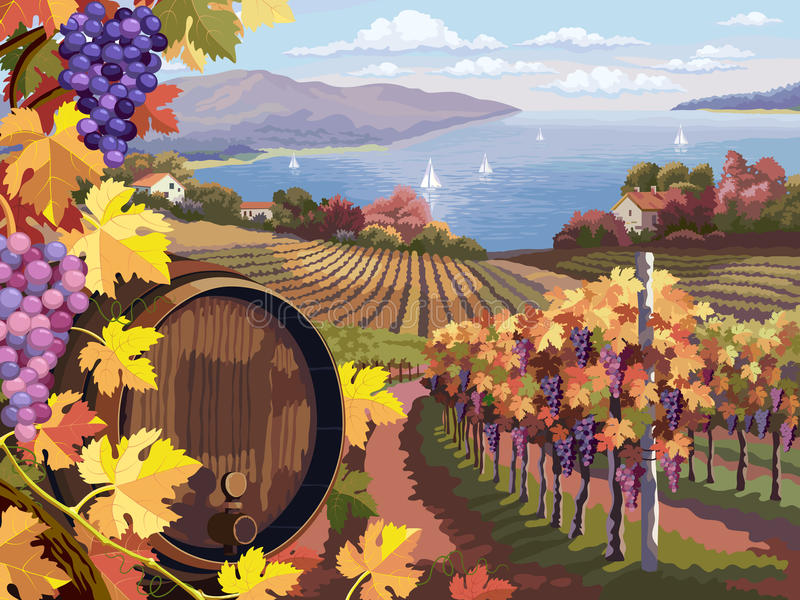 Vineyard and grapes bunches. Rural landscape with vineyard and grapes bunches and wooden barrel for wine royalty free illustration