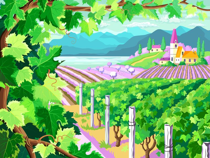 Vineyard and grapes bunches. Spring season landscape. vector illustration