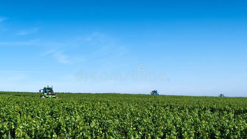 Vineyard grass trimmers stock image