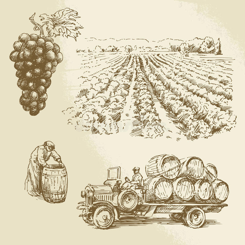 Vineyard, harvest, farm. Hand drawn collection vector illustration