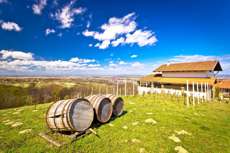 Vineyard hill landscape and wine barrels. View, Ludbreg, Croatia stock image