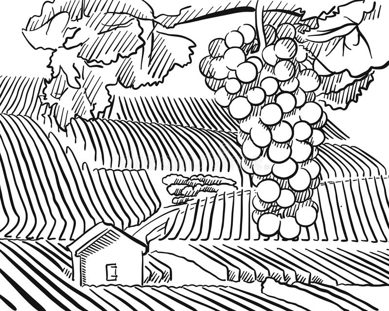 Vineyard Hills with hanging Grapes in Foreground. Vector Sketched Outline Artwork royalty free illustration