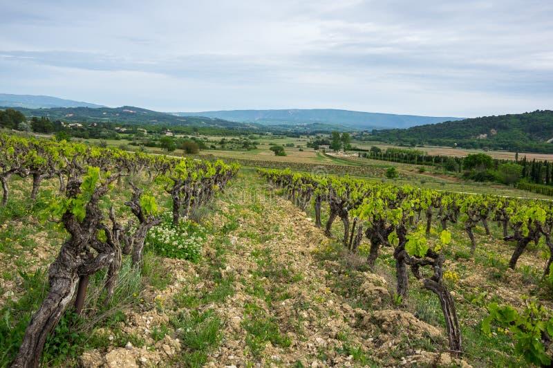 Vineyard on the hills royalty free stock photos