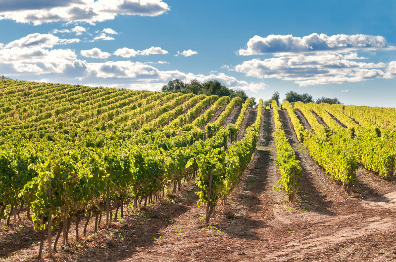 Vineyard and hills, Spain stock photos