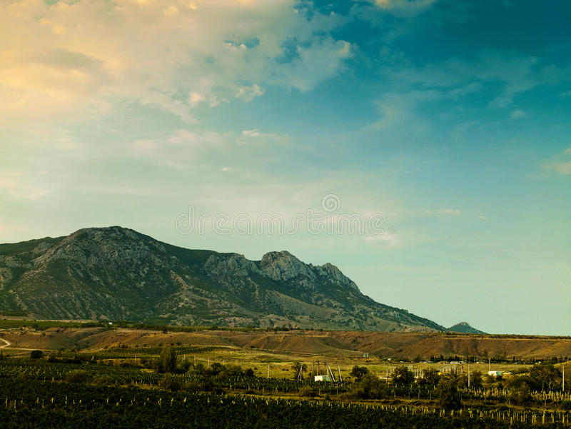 Vineyard on the hilly mountain royalty free stock image