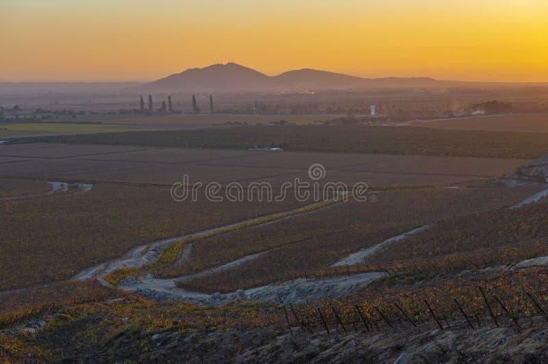 Vineyard in Ica at Sunset, Peru royalty free stock photos