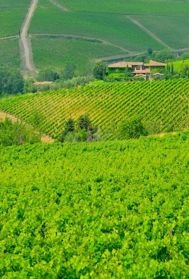 Free Vineyard In Chinati No.1 Stock Images - 3820694