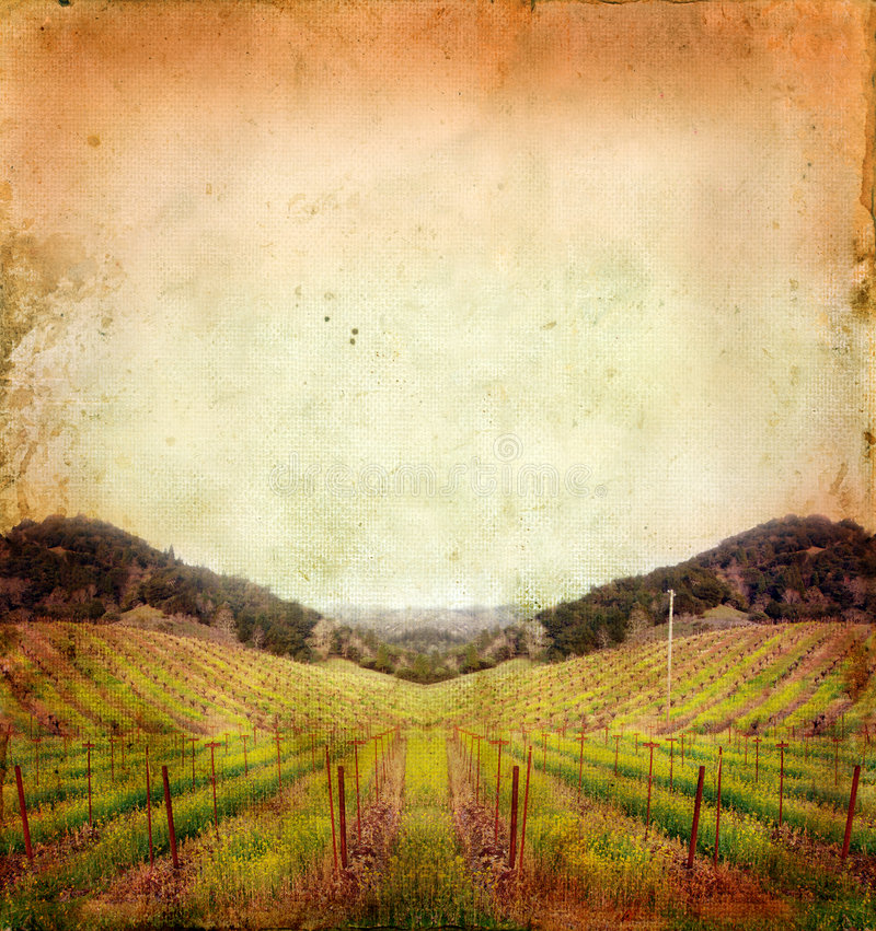 Free Vineyard In Winter On A Grunge Background Royalty Free Stock Photos - 6799528