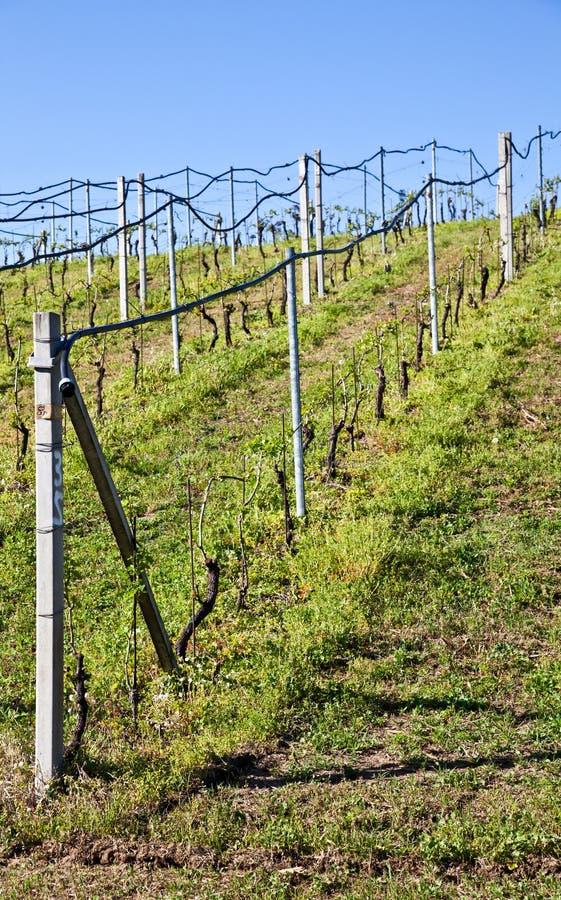 Vineyard Irrigation System Stock Photos
