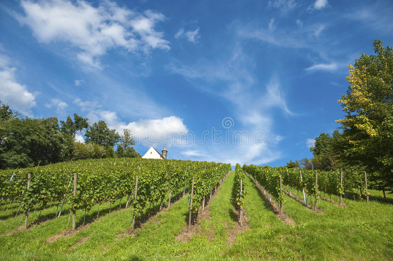 Vineyard with Jacobus Chapel in Gengenbach royalty free stock photo