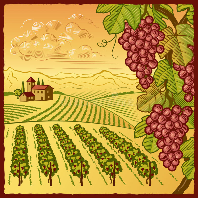 Vineyard landscape. Retro vineyard landscape in woodcut style. Vector illustration with clipping mask vector illustration